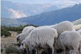 Vida pastoril